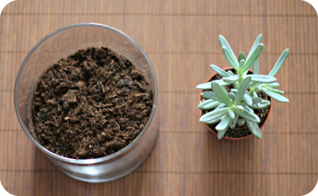 Urban Jungle DIY Terrarium